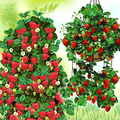 200Seeds Climbing Red Strawberry Bonsai Plant House Herb Garden Flower Pot Decor