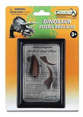 Dinosauro Fossil Collecta Velociraptor Tooth & Foot Claw 89291 Dente E Artiglio