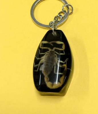 Fine Cool Insect Jewelry  Black Leng Scorpion Design Key-Chains Yqt023