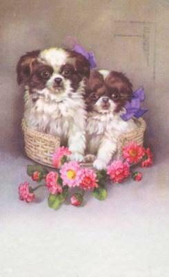 Vintage RARE Postcard 2 Japanese Chin Dogs in Basket Belgium 1933