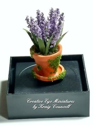 Miniature 1:12 Artisan Potted Lavender in mossy pot by Kraig Councell