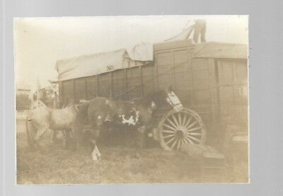 5x7  VINTAGE HORSE PHOTO #14 BLACK AND WHITE B/W UNKNOWN HORSES PHOTO #14