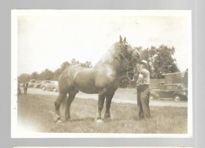 5x7  VINTAGE HORSE PHOTO #19 BLACK AND WHITE B/W UNKNOWN HORSES PHOTO #19
