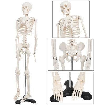 85CM Life Size Human Anatomical Anatomy Skeleton Advanced Medical Model + Stand