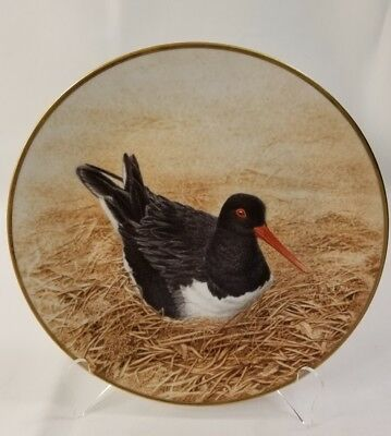 Collector Water Bird Plate Eric Tenney OYSTER-CATCHER 24K gold rim Porcelain 9.5