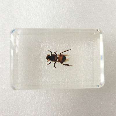 Insect Specimen Honey BeeApis Mellifera In Clear Lucite Paperweight