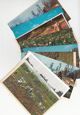 Lot of 10 Vintage Era Massachusetts Postcards Cranberrries Cape Cod Bogs MASS MA
