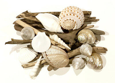 Shells White, Pearl and drifwoods for craft project, wedding, home decoration.