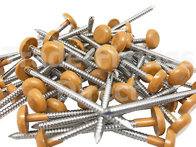 65 x 3.35mm OAK UPVC POLY TOP PINS/NAILS PLASTIC HEADED A4 STAINLESS STEEL