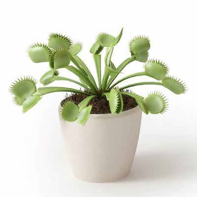 VENUS FLY TRAP KIT Includes Pot & Seeds - Grow Your Own Carnivorous Indoor Plant