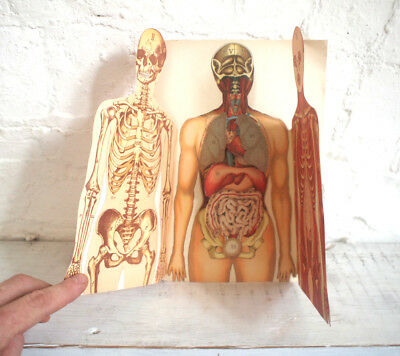 Anatomical Medical Fold Out Poster Print Human Body Vintage Retro Antique 1900s