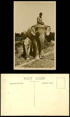 Federated Malay States Elephants F.M.S Elephant Cub 1920 Old Real Photo Postcard