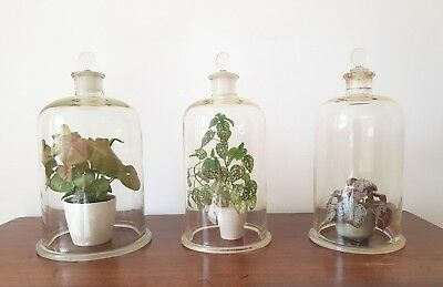 MEDIUM GLASS BELL JAR - Vintage Display Scientific Apothecary Terrarium Cloche