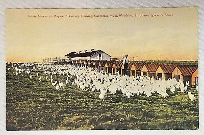 "Black Americana Racist Postcard ""White Slaves at Maywood Colony, Corning Cal."""