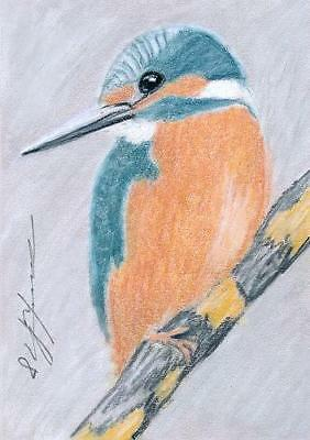 ACEO original pastel drawing kingfisher wildlife by Anna Hoff