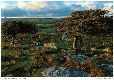England - Dartmoor  -  British landscape in summer - Dartmoor National Park