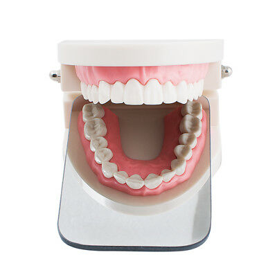 Polished Intraoral Orthodontic Photographic Glass Mirror 2sided Rhodium Occlusal