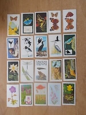 Job Lot Of 20 Summer County Countryside Cards - All Different - Van Den Berghs 2