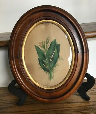 Lovely Antique OVAL WALNUT Picture Frame with Gilt Liner Nice Detail