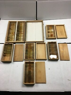 Vintage Prepared Microscope Slides- Lot Of 6 Boxes- Animal, Plants, And More!
