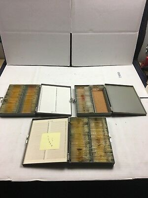 Vintage Prepared Microscope Slides- Lot Of 3 Boxes- Former Teacher's
