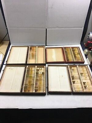 Vintage Prepared Microscope Slides- Lot Of 4 Boxes 1930's Plants Animals & More!