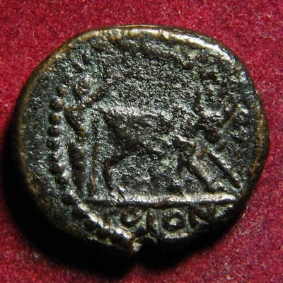 Elagabalus AE21 Petra Decapolis Arabia, r. Founder ploughing with oxen 218-222AD