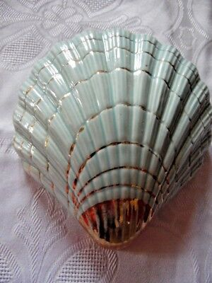 Vintage Shell Shaped Blue Wall Pocket Vase With Gold Edging