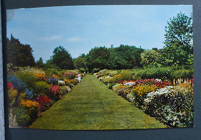 Vintage British Postcard - Herbaceous Borders At The Rhs Gardens