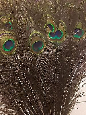 "25*Natural Peacock Eye Feathers For Floral Decorations- 31-33"" / 79-84 cms Long"