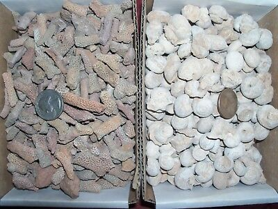 10 fossils. 5 fossil coral and 5 fossil sea snails