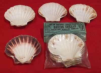 SET OF 8  NATURAL OVEN PROOFED Baking Shells Selected SCALLOP SHELLS