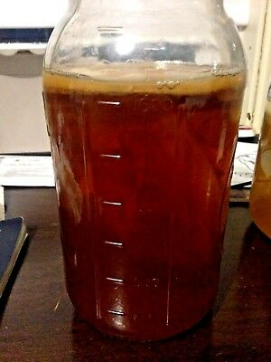 Kombucha Scoby Mother Mushroom Culture Makes A Gallon Over 4 Inches