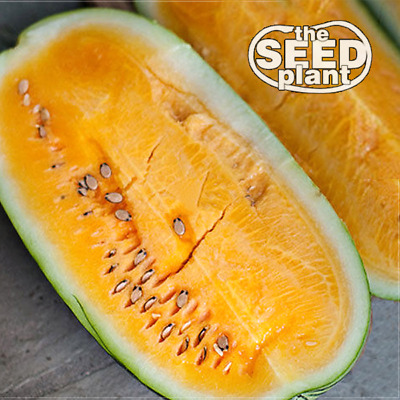 Tendersweet Orange Watermelon Seeds - 25 SEEDS NON-GMO