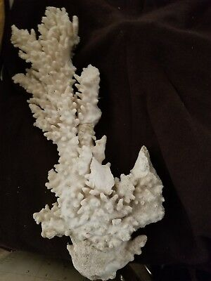 LARGE NATURAL WHITE CORAL REEF SIZE 15 INCHES LONG by 5 INCHES