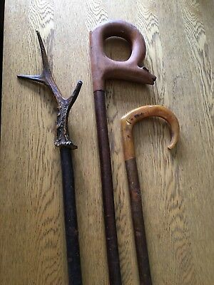 Collection Of 3 Walking Sticks