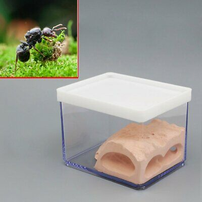 Ant Nest Housing Ant Farm Box Formicarium Display Case For Small Ant Colony NEW