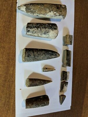 LOT OF 11 PCS BELEMNITE Fossil From Wyoming USA AND ONE FOSSIL ROCK