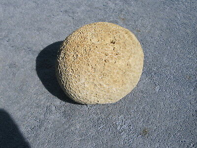 Brain Coral, 4 1/2  X 3 1/2 inches, almost 2 pounds