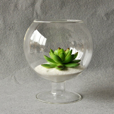 095D Clear Glass Vase Glass Terrarium Cup Shaped Creative Plant Flower Home Gard