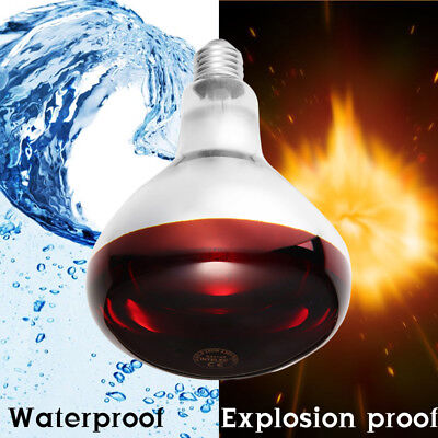 250W INFRA RED HEAT BULB LAMP RUBY Pets Poultry chick brooder Lamp livestock