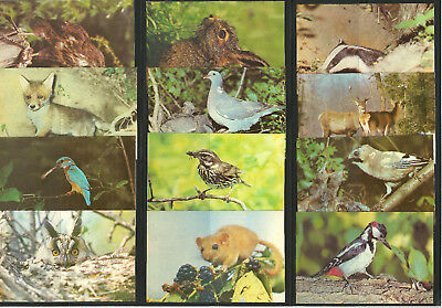 USSR Ukraine 1990 Taschenkalender Wild Animals Rar Set of 12 pocket calendar New