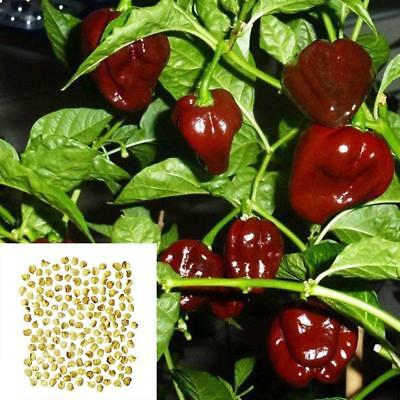 200 Seeds/Pack Chocolate Pepper Seeds Naga Jolokia Chilli Seeds Ghost Pepper DIY