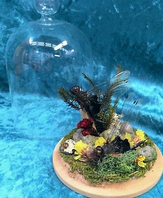 R17a Taxidermy Entomology Dragonflies Antique Victorian Style Glass Dome Disply