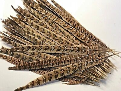 10pcs Natural Pheasant Tail Feathers 28-32cm DIY Art Craft Millinery Vase Decor