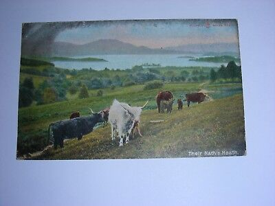 vintage postcard. Reliable series. Highland cattle. posted Maybole