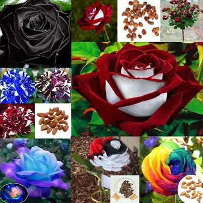 200x Colorful Rainbow Mix Rose Flower Seeds Home Garden Plants Multi-Color