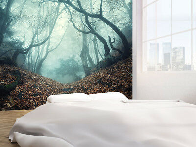 Trail through a mysterious dark old forest in fog Wallpaper wall mural(40618754)