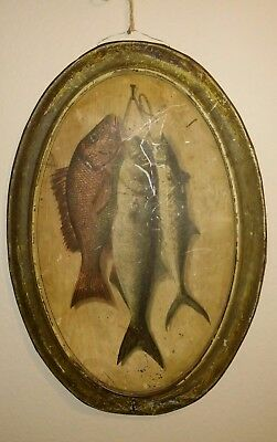 1880s Antique Tin Fishing Fish Sign Picture Advertising Rare Pole Lures Maritime