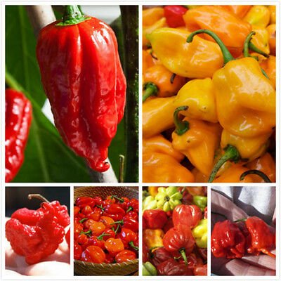 100Pc Assorted Ghost Pepper Carolina Reaper Trinidad Moruga Scorpion Chili Seeds